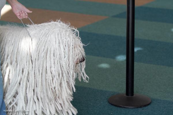 2011 Wildwood Dog Show-04075412