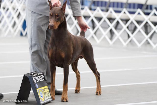 2011 Wildwood Dog Show-08095250