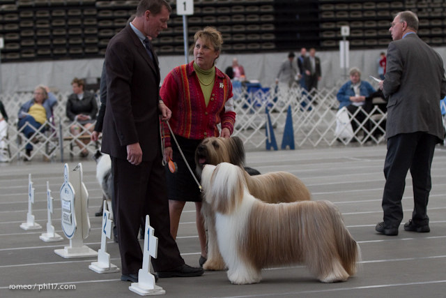 2011 Wildwood Dog Show-08095739