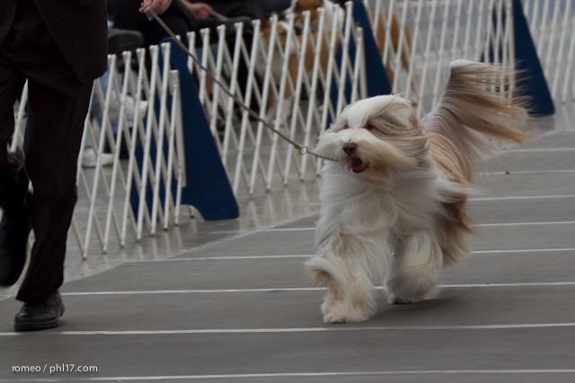 2011 Wildwood Dog Show-08095748