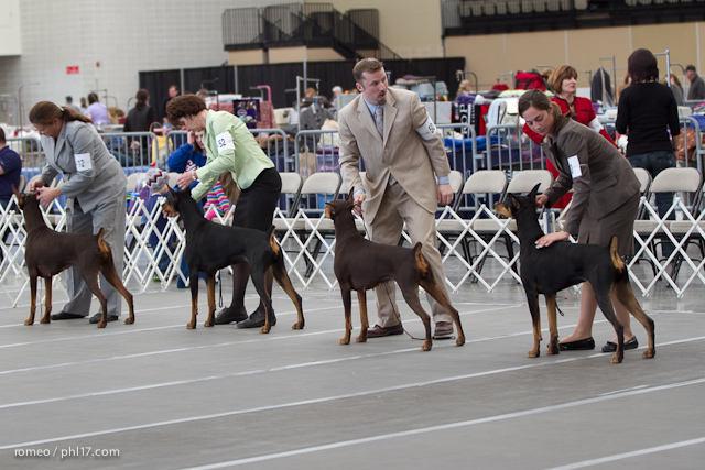 2011 Wildwood Dog Show-08095750