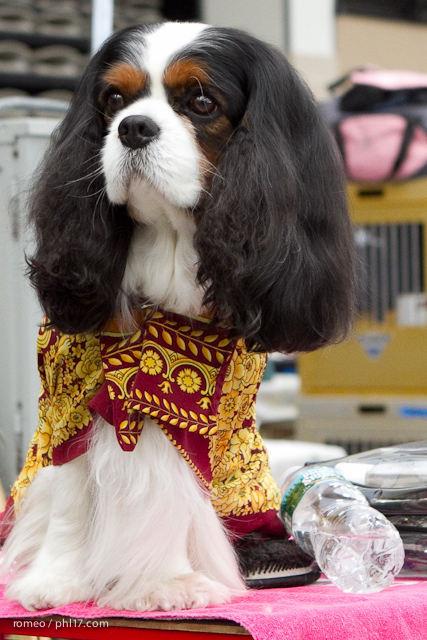 2011 Wildwood Dog Show-08100309