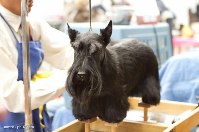 2011 Wildwood Dog Show-08100314