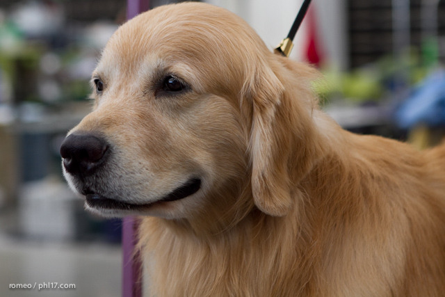 2011 Wildwood Dog Show-08100319