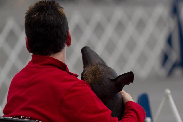 2011 Wildwood Dog Show-08100334