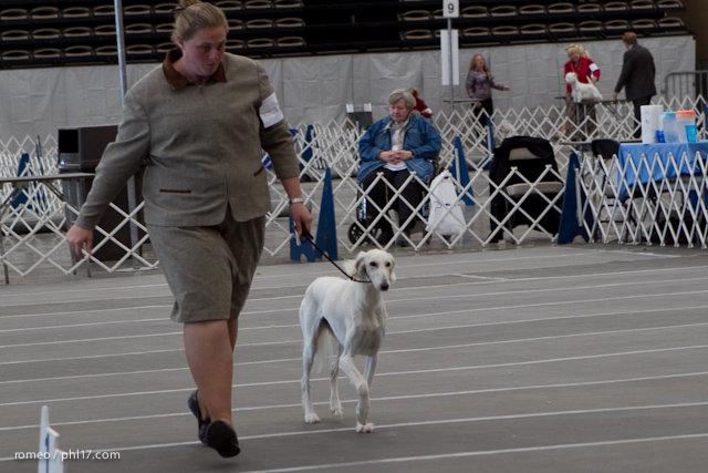 2011 Wildwood Dog Show-08100344
