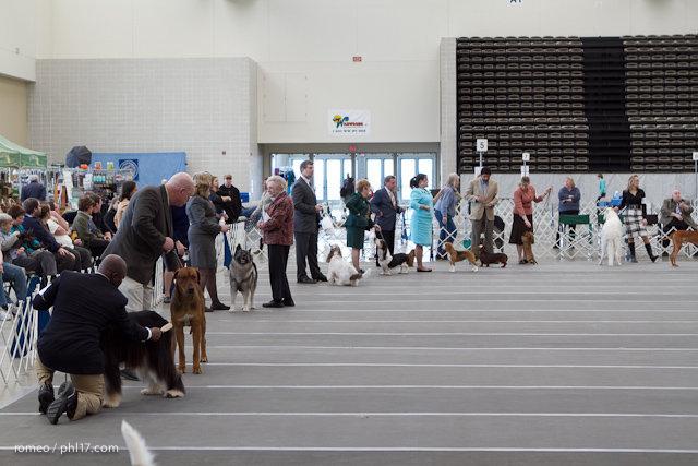 2011 Wildwood Dog Show-08100356