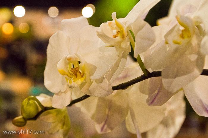 2012 Philadelphia Flower Show-02114646