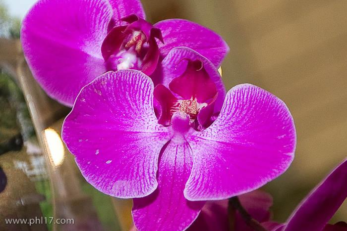 2012 Philadelphia Flower Show-02114659