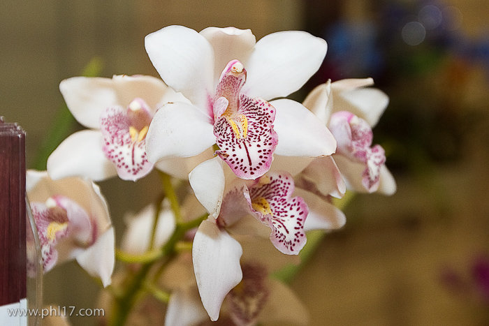 2012 Philadelphia Flower Show-02114702