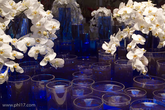 2012 Philadelphia Flower Show-02115145