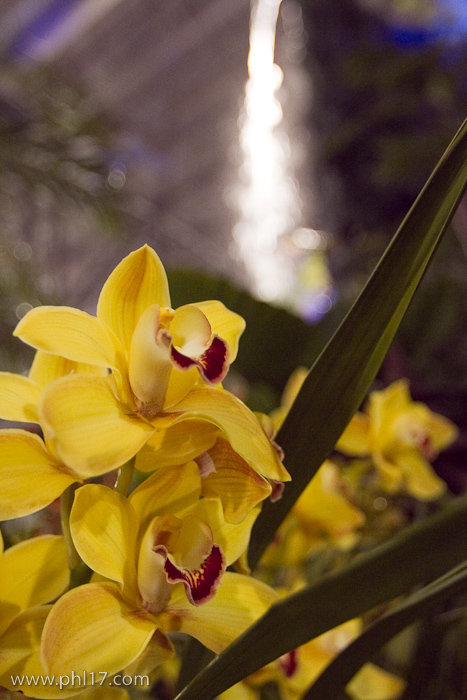 2012 Philadelphia Flower Show-02115158