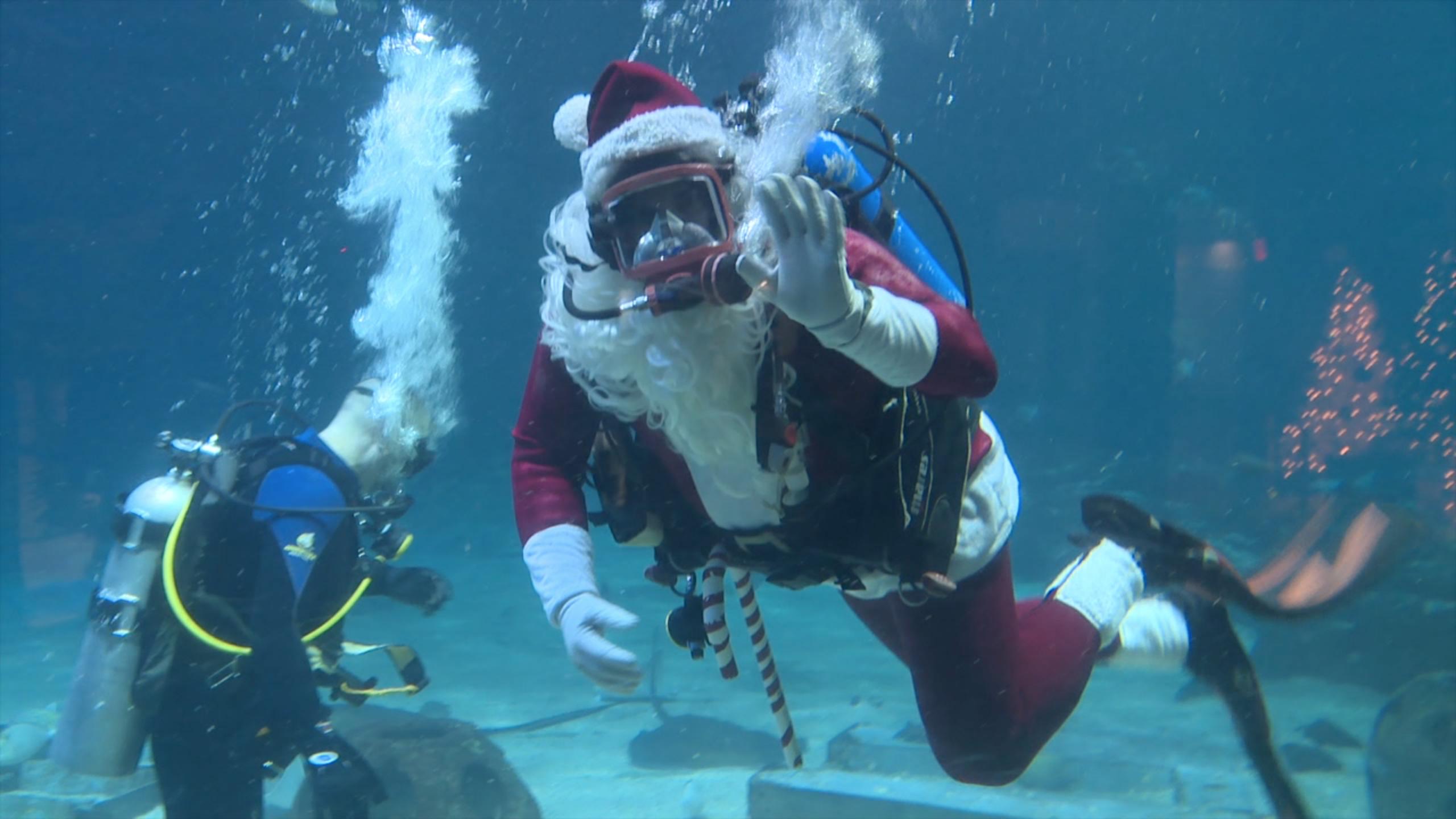 Adventure Aquarium   PHL17